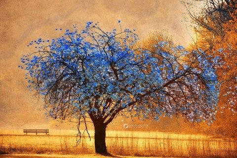 arbol azul