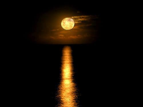 luna noche dorada