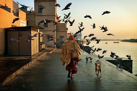 hombre perro aves andando, volando