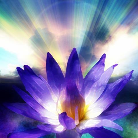 flor violeta radiante