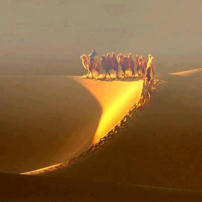 camellos y luz