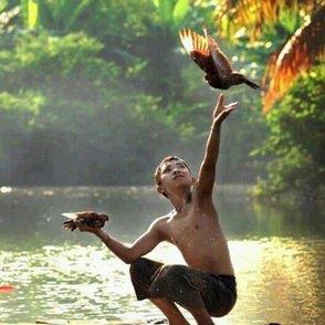 niño dejando volar pajaro
