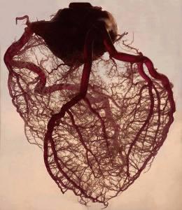 corazon raiz