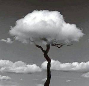 arbol y nube
