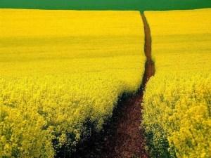 camino flores