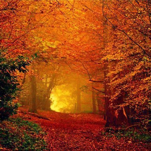 bosque de oro