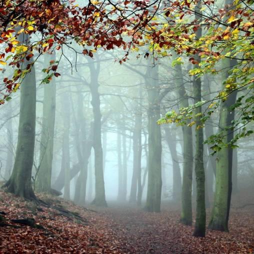 bosque precioso