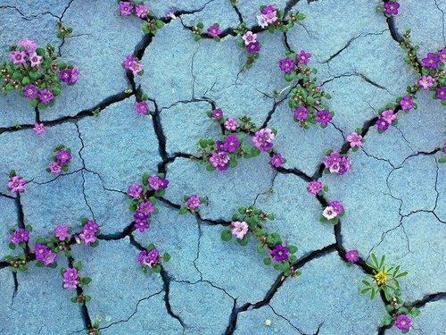 arrugas con flores.jpg