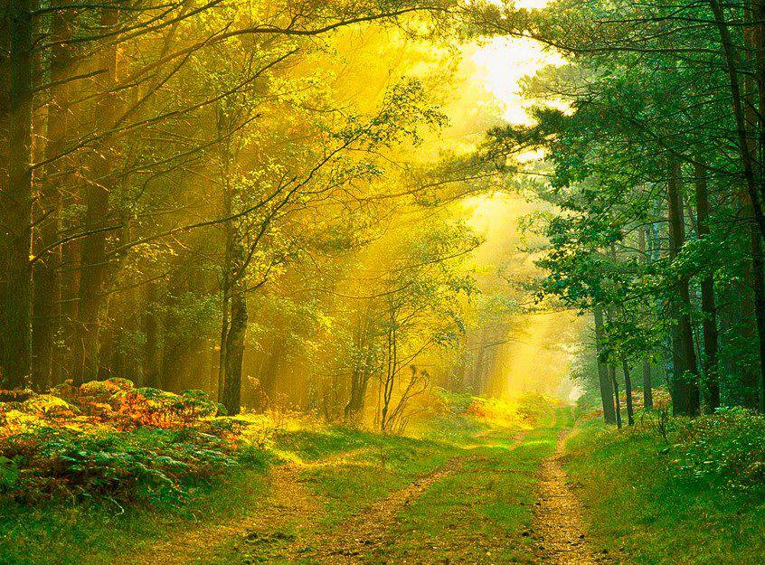 bosque amarillo
